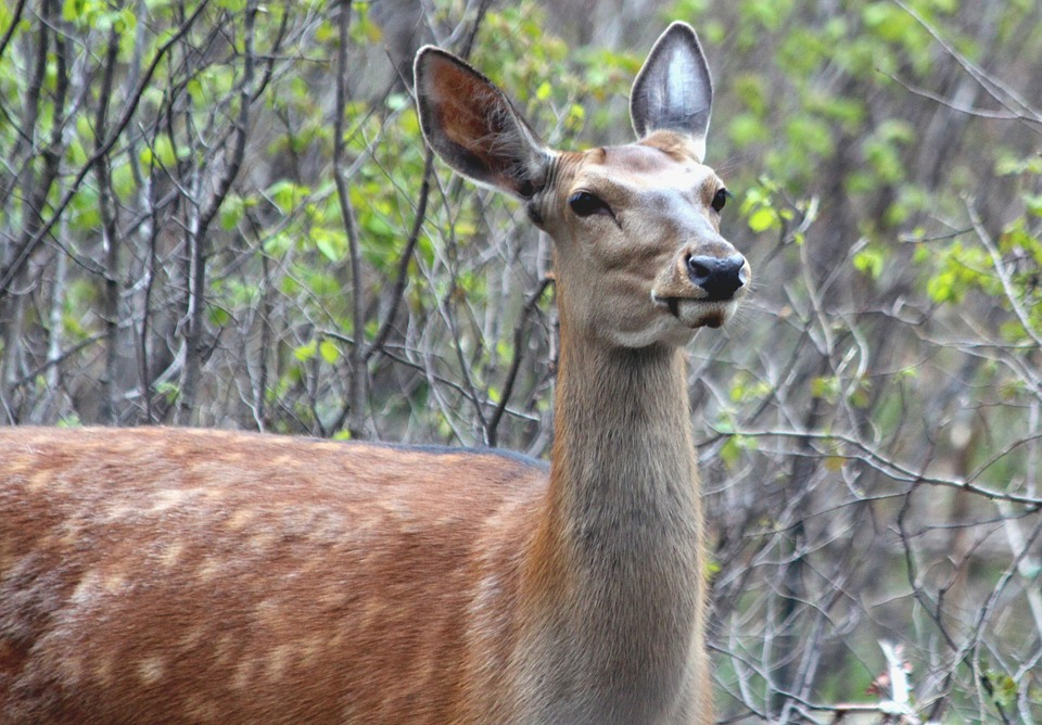 Whitetail Deer Hunting: From Weather Matters to Hunting Success ...