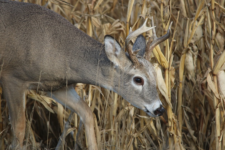 Whitetail Deer Hunting From Weather Matters To Hunting Success