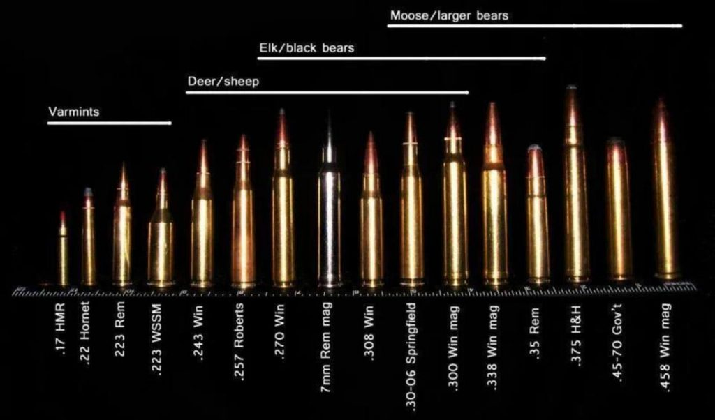 what-are-best-deer-calibers