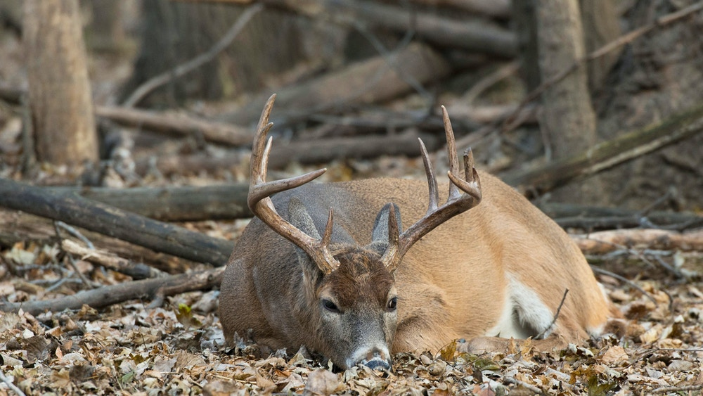 """7 myths to find out """"where do deer sleep?"""""""